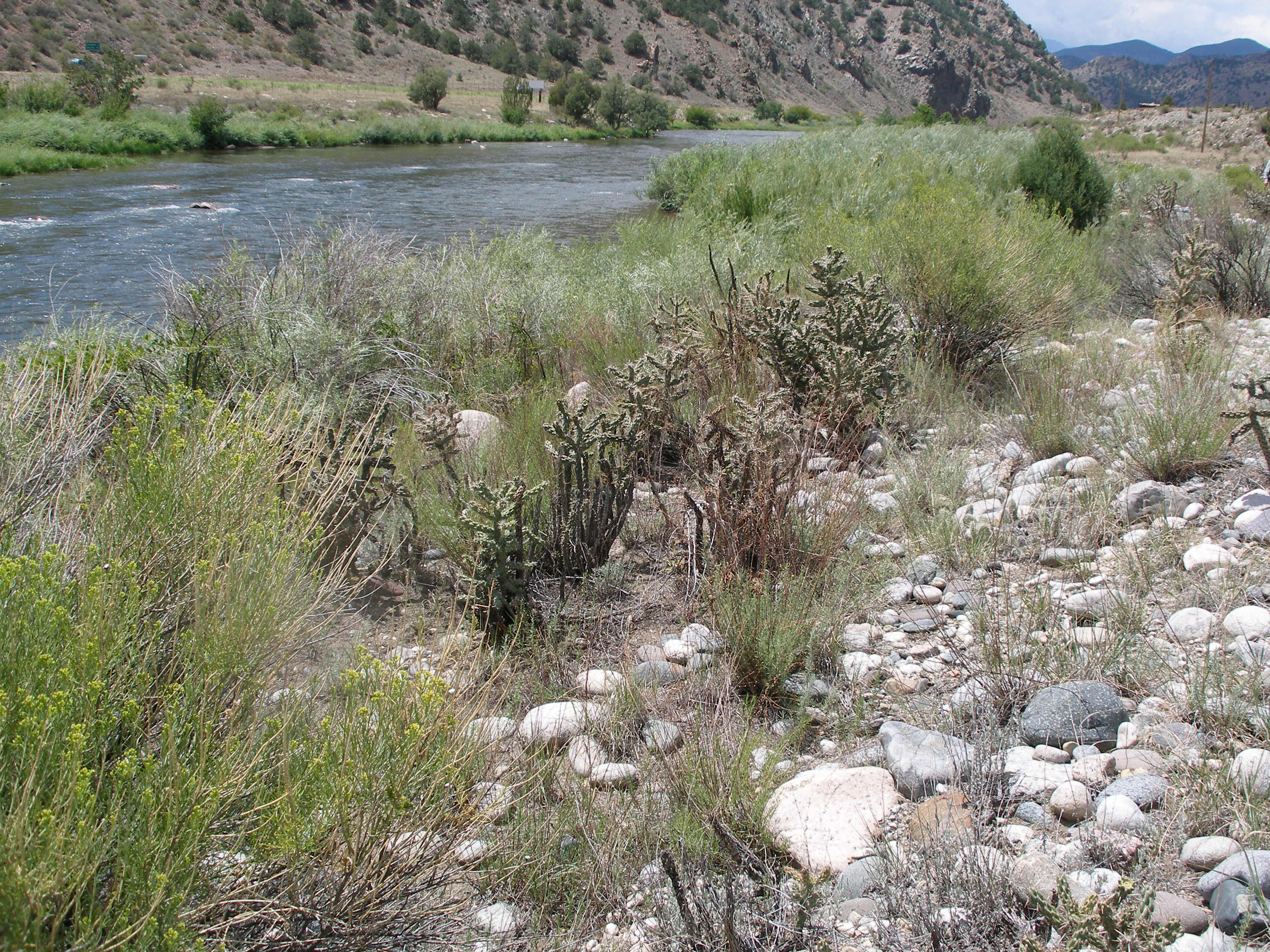 View Upstream from Texas Creek