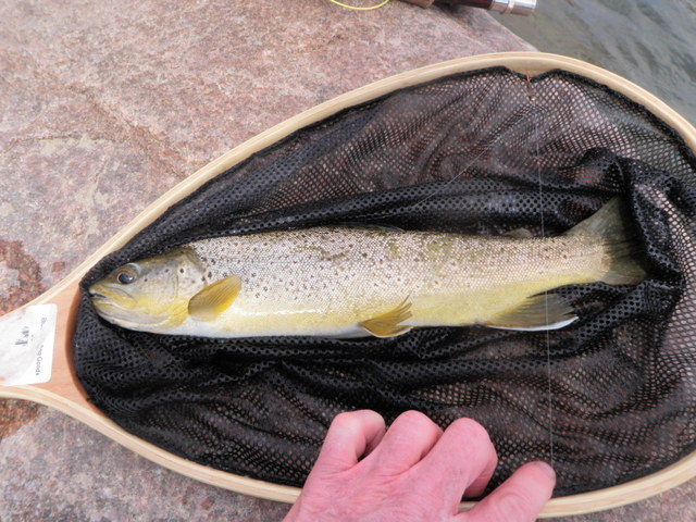 Nice Brown Landed in the Morning on Beadhead Hares Ear