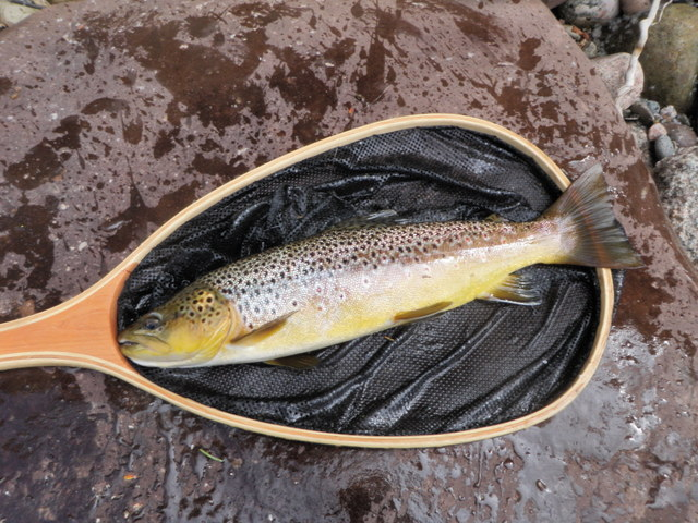 "17"" Eagle River Brown"