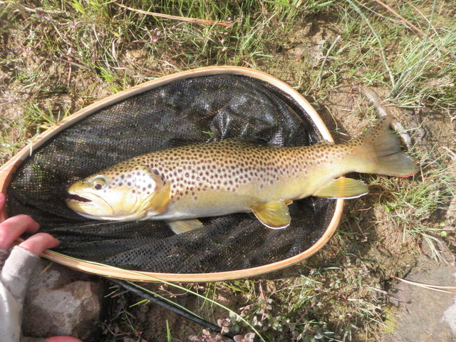 "16"" Brown Was Sole Catch on Saturday"
