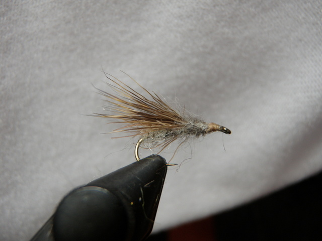 A Gray Muggly Caddis