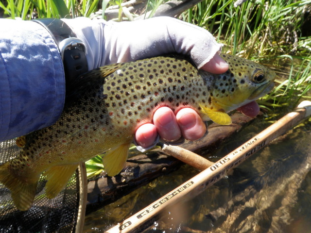 Perhaps the Nicest Fish of the Day