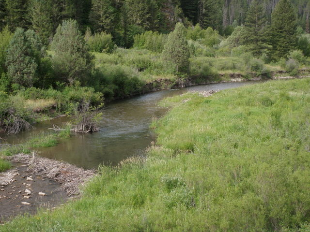 Bear Creek on Monday Morning
