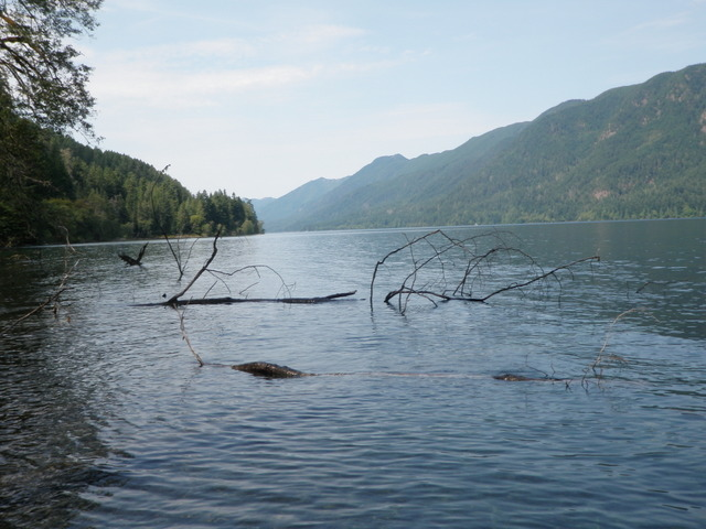 View Along the South Shore of Lake Crescent