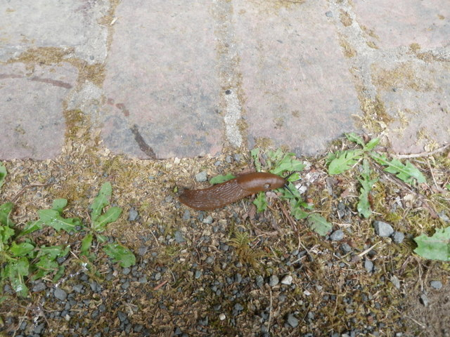A Slug Near the Start of Our Hike in the Quinault Rainforest