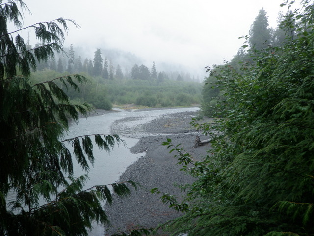 Looking Up the East Branch in the Mist and Rain