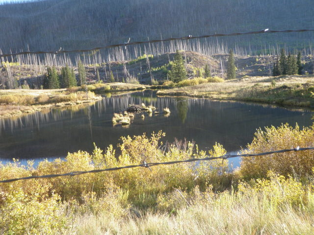 Looking Back at the Beaver Pond